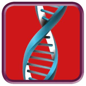 Erfolgsfaktor Business DNA